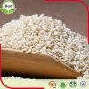 Export-natürlicher organischer weißer indischer Sesam