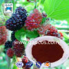 Natural Freeze Dried Organic Mulberry Powder