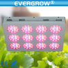 Diodo emissor de luz Grow Lighting de Grow Sytem 600W do Hydroponics