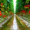De hete Serre van de Plastic Film van Griekenland van de Tunnel van de Verkoop Materiële