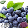 Natural puro Acai Berry Extract Anthocyanidins, Proanthocyanidins e Polyphenols,