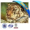 Естественное Material 3D Animated Picture Tiger