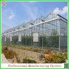 Estufa favorável das batatas da folha do policarbonato da fábrica de China