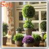 Sfera miniatura dell'erba dei bonsai delle piante d'appartamento del fornitore della Cina