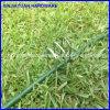 塗られた上塗を施してある景色のステープルの緑のペンキの芝地のステープルの牧草地のステープル