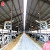 Полуфабрикат молочная ферма стальной структуры/ранчо скотин