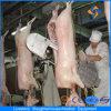 ヨーロッパ様式のブタの食肉処理場の機械装置