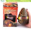 공룡알 장난감을 부화하는 큰 마술은 물 성장하고 있는 애완 동물을 추가한다
