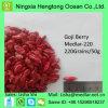 La hierba popular da fruto baya de Goji en venta caliente