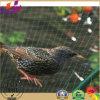 Плетение Анти--Птицы для сада для экспорта