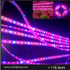 LED Grow Lighting60LED/M 5050 Red en Blue LED Grow Lights /Flexible Strip Light voor Plant