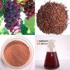 ブドウのシードのエキスProanthocyanidins 95%