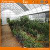 Serra della Multi-Portata del film di materia plastica con la piantatura di verdure della coltura del substrato