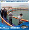 Gaiola de flutuação dos peixes do frame do HDPE para a cultura do esturjão
