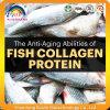 化粧品のための魚のコラーゲン蛋白質Oligopeptide