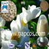 PaeoniaのLactifloraの最上質のエキス