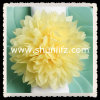 Papel de tejido de marfil de la decoración del banquete de boda POM POM
