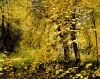 Естественное Forest Painting на Canvas (SJMY1286)