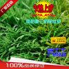 Grass artificiel pour Landscaping Artificial Lawn