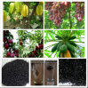Humic Acid Potassium Humate Granules Water Soluble