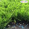 Heißes Sale Landscaping Grass mit Best Quality
