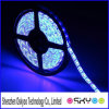 Roll 3528 SMD Waterproof 60 LED/M 300 LED Warm Cool RGB Flexible LED Strip Light