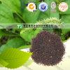 自然な漢方薬の原料の精液Plantaginis