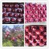 Apple red delicious/Huaniu fresco Apple