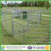 馬の円形のヤードは制御された安全な仕事域を作る