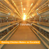 Type de la Chine H cage de couche de poulet d'oeufs à vendre