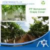 Spunbond Nonwoven Fabric pour Fruit Cover