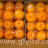 Crop novo Highquality de Mandarin Orange