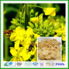 Tabuleta natural maioria do pólen da abelha da violação do mel