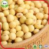 Nicht GVO-proteinreiche Soyabohnen