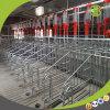 Deba van Qingdao de Kratten van de Zwangerschap van de Apparatuur van het Ontwerp van de Varkensfokkerij voor Verkoop