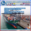 Lanzarote에 에이전트 Sea Shipping Sea Freight Shipping 중국