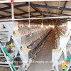 Equipamento automático das aves domésticas para grelhas e camadas