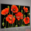 Verniciatura rossa dei papaveri di arte moderna della parete (KLFL3-0136)