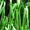 Gramado do jardim, relvado artificial, grama sintética