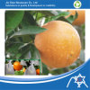 Pp Nonwoven Fabric voor Fruit Cover