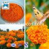 Vue Protection Zeaxanthin de Marigold Extract