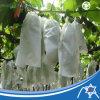Nonwoven ткань для крышки плодоовощ
