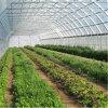 고품질 다중 경간 농업 필름 온실