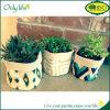 Plantador elegante Eco-Friendly da tela de Onlylife com projeto diferente