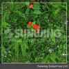 Sunwing 2015 플라스틱 회양목 산울타리 인공적인 플랜트 담