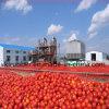 A ruptura fria rufou a pasta de tomate