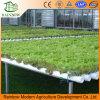 Sistema do Hydroponics para vegetais da estufa