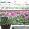 Garniture de refroidissement verte de Brown pour la plantation de serre chaude d'orchidée de guindineau