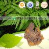 Medicina natural pura Rhizoma Cibotii Gou Ji da erva de 100%