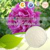 자연적인 백색 작약 루트 추출 10% 50% Paeoniflorin